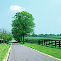 Road Passing Through Horse Farms by Panoramic Images