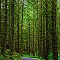 Road Through The Woods by Rick Berk