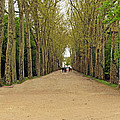Road To Chenonceau by Elvis Vaughn