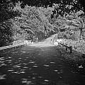 Road To Hana by Bill Long
