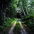 Road Trip- Back Country Road by Joy Nichols