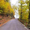 Road With Autumn Trees by Mats Silvan