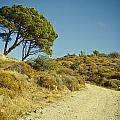 Road With Olive Trees by Raimond Klavins