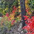 Roadside Fall Colors by Duane McCullough