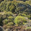 Roadside Forest Scenery by Bob Phillips