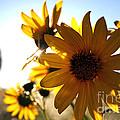 Roadside Sunshine by Martha Burton