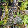 Roadside Waterfall. Mount Rainier National Park by Connie Fox