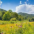 Roan Mountain State Park by Melinda Fawver