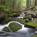 Roaring Brook by Patrick Downey