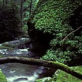 Roaring Fork Creek  by Cyril Furlan
