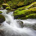 Roaring Fork Great Smoky Mountains National Park Cascade - Gatlinburg Tn by Dave Allen