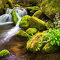 Roaring Fork Great Smoky Mountains National Park TN by Dave Allen