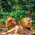 Roaring Lions by Jijo George