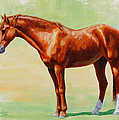 Roasting Chestnut - Morgan Horse by Crista Forest