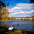 Roath Park Lake by Mark Llewellyn