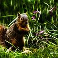 Robbie The Squirrel -0146 - F by James Ahn