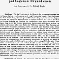 Robert Koch: Paper, 1881 by Granger