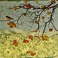 Robin In Maple by Carolyn Doe