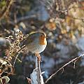 Robin In Rays by Bethany Dean
