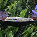 Robins In Bird Bath by Robin Maria Pedrero