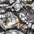 Rock Ants by Photographic Art by Russel Ray Photos