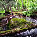 Rock Creek by Brook Burling