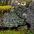 Rock Face With Moss by Rob MacArthur