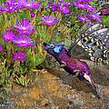Rock Flower Birguana Fly by Arthur Fix