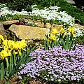 Rock Garden Flowers by Kathryn Meyer
