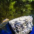 Rock In The Water by Alex Potemkin