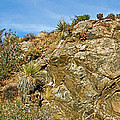 Rock Pile In Black Rock Canyon On Panorama Loop Trail In Joshua Tree National Park-california by Ruth Hager