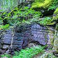 Rock Wall Trail Of The Cedars Glacier National Park Painted by Rich Franco