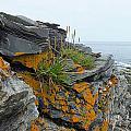 Rockbound Coast by Kathleen Heseltine