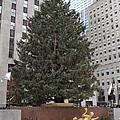 Rockefeller Christmas Tree by Alice Gipson