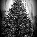 Rockefeller Christmas Tree by Kimberly Perry