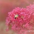 Rockin Pink Bee by Peggy Franz