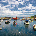 Rockport Harbor by Liz Mackney
