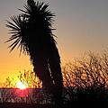Rockport Texas by Nelson Skinner