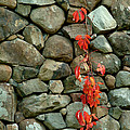 Rocks And Ivy by Robert DeFosses