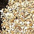 Rocks And Mulch by Deborah  Crew-Johnson
