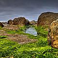 Rocks And Seaweed by Joseph Bowman