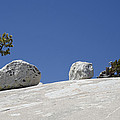 Rocks Between A Shrub And A Tree by Bruce Gourley
