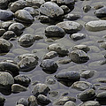 Rocks In Shallow Water by Greg Thiemeyer