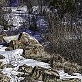 Rocks In Snow by Timothy Hacker
