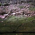 Rocks - Parfreys Glen - Wisconsin by Steven Ralser