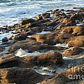 Rocky Beach At Sunrise by Darleen Stry