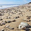 Rocky Beach by Radu Razvan