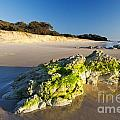 Rocky Beach by Tim Hester