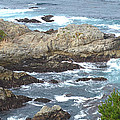 Rocky Cove Detail by Barbara Snyder