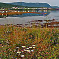 Rocky Harbour-nl by Ruth Hager